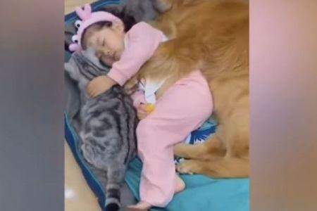 ネコを抱き、犬に囲まれてお昼寝する、かわいい少女の動画が話題に