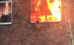 燃え上がる2階の窓、迫る炎の中で取り残されたネコの運命は?
