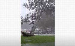 ハリケーン「デルタ」に襲われた街、強風により大木が根っこから倒される【動画】