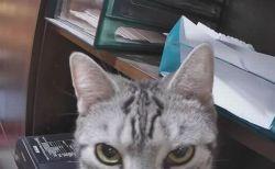 「なんで早く帰らないの💢」お腹を空かせたネコ、不機嫌そうにカメラをじっと睨む