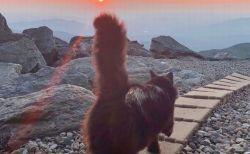 山頂にある測候所で暮らし、皆から愛されてきたネコが亡くなる【アメリカ】