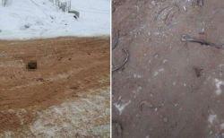 ロシアで道路上に人骨が散乱、高速道に頭蓋骨なども転がる