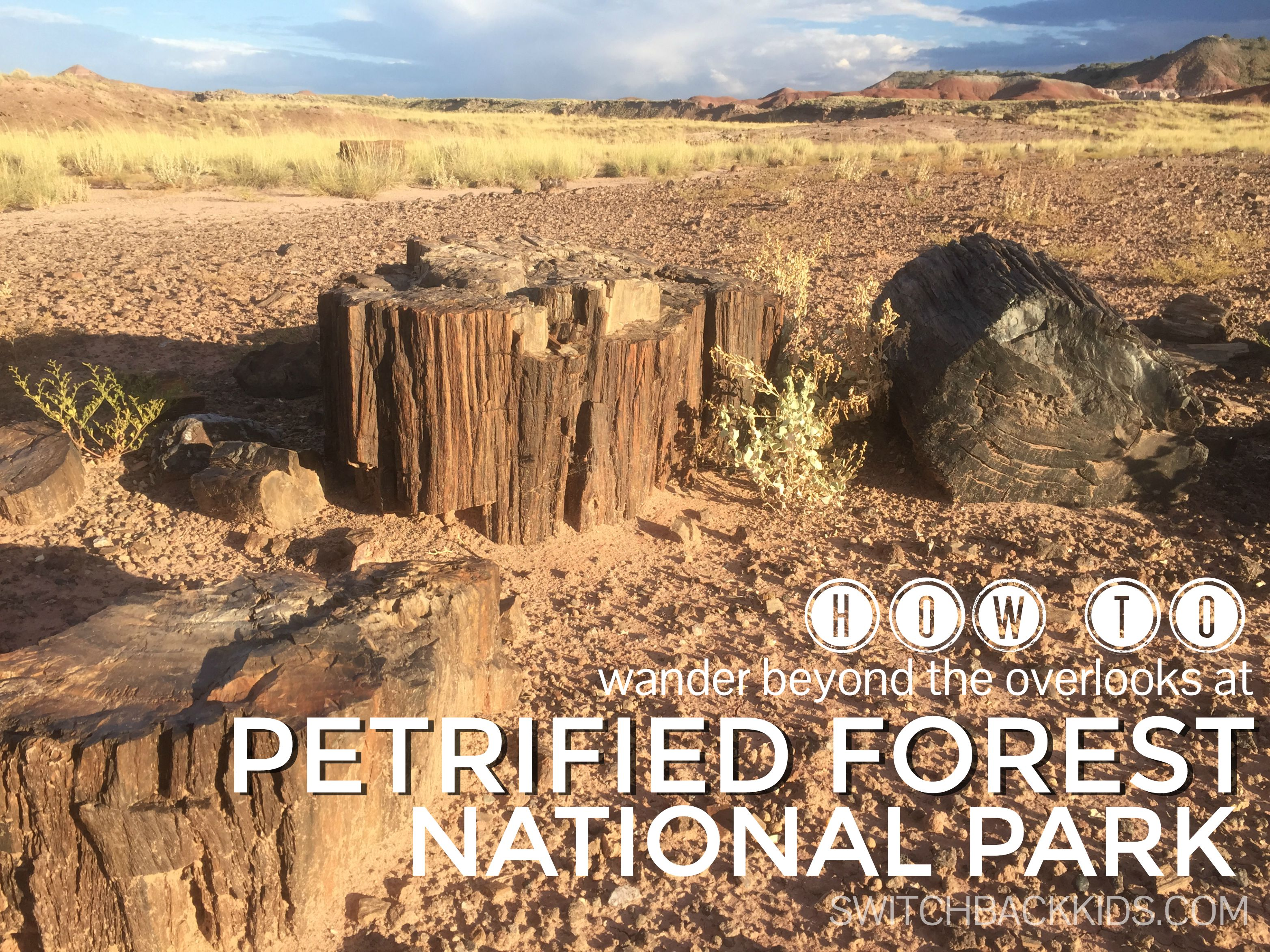 VIDEO: Petrified Forest National Park