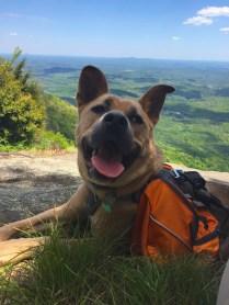 One happy adventure pup.