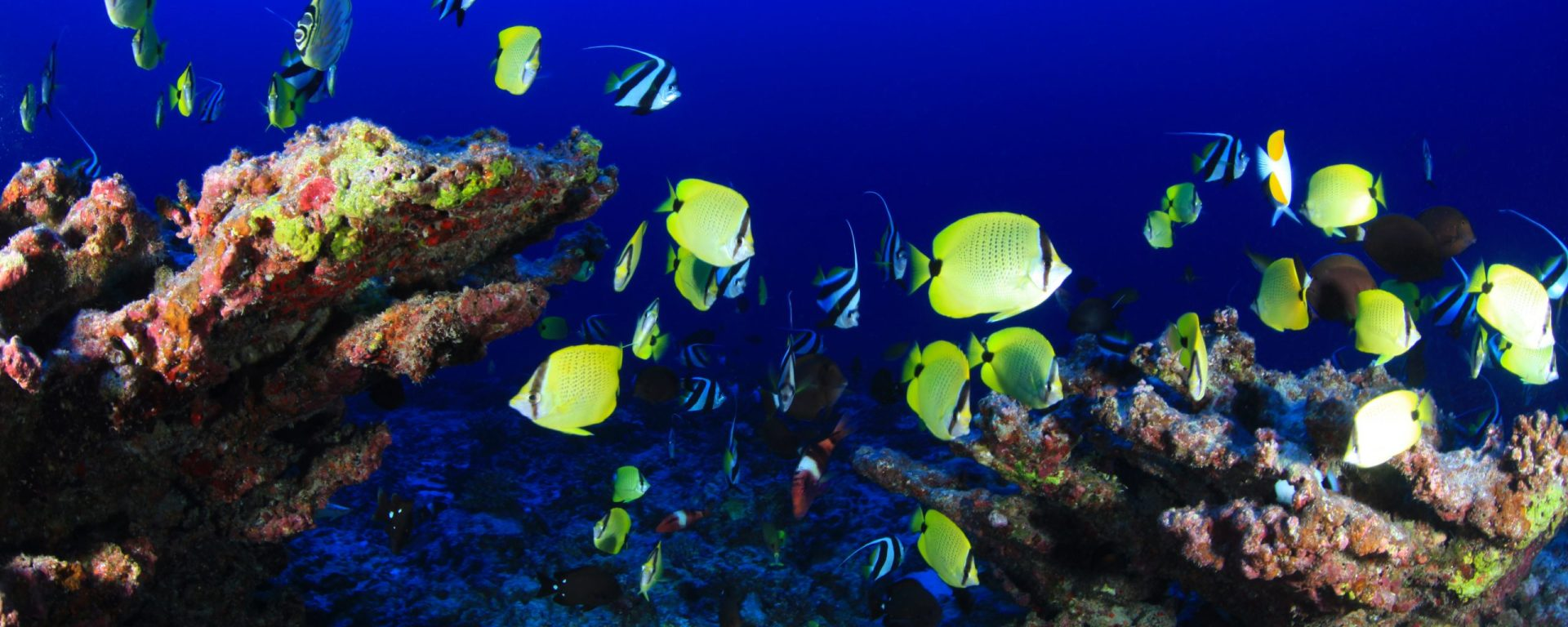 Finding Nemo Cover Songs   Switching Styles   Music   Online Publication  