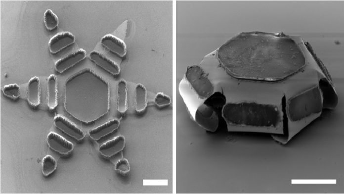Theragrippers: Micro Star-shaped Drug Administrators Attachable to Mucosal Tissues