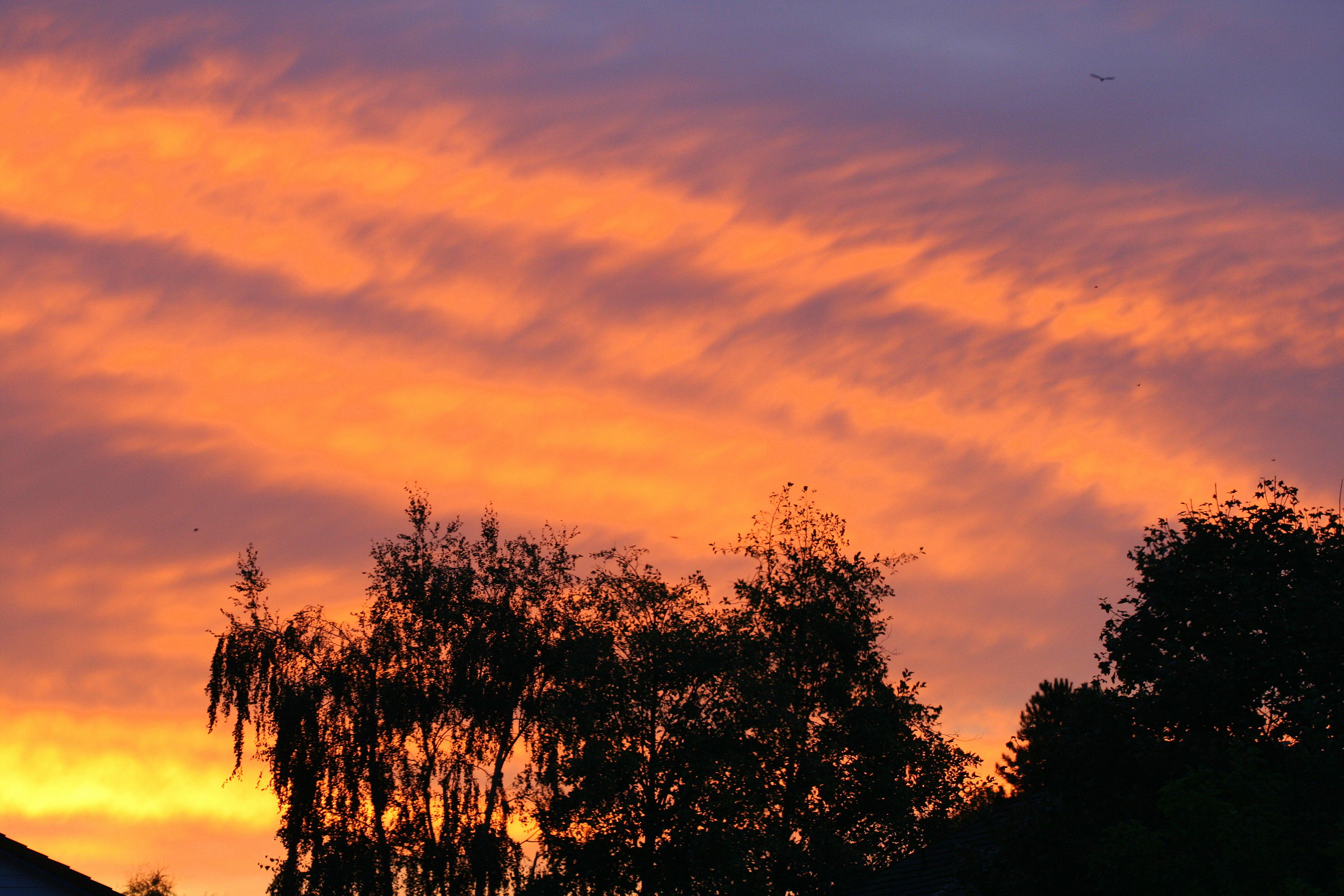 Red Sky Morning.......   (SwittersB)