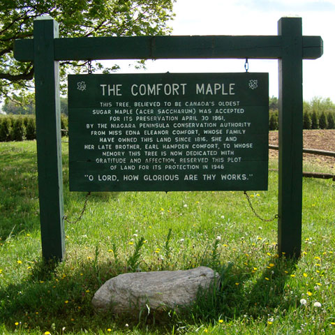 The Comfort Maple is located on Metler Road, between Cream and Balfour Streets, in Pelham, Ontario.