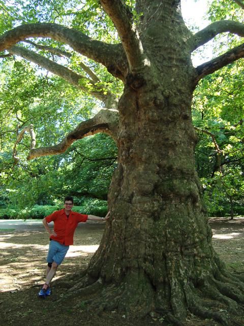 4_big tree in tokyo garden