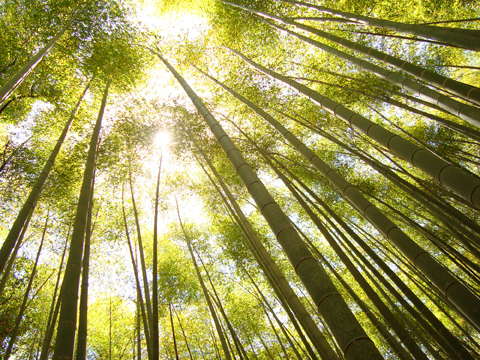8_bamboo forest