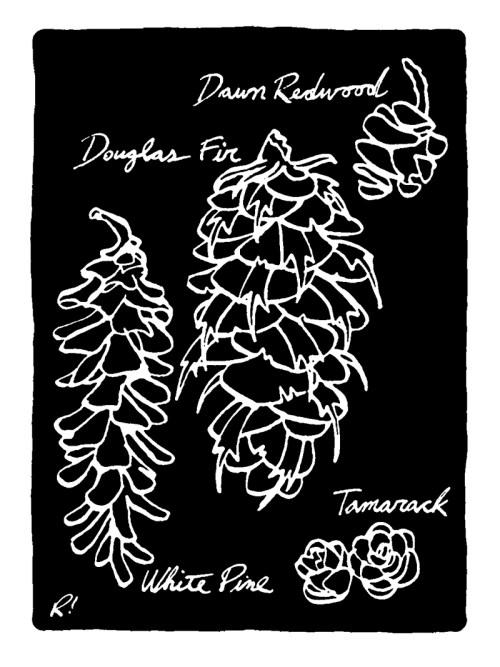 Cones drawing by Rob Elliott