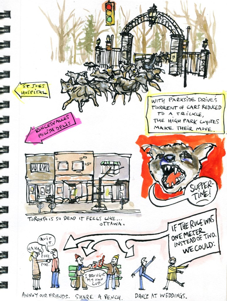 My Pandemic Diary page 33 High Park coyotes,Ottawa,social distancing