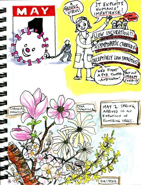 My Pandemic Diary page 42 Spring flowering trees, genius virus, lil Covie
