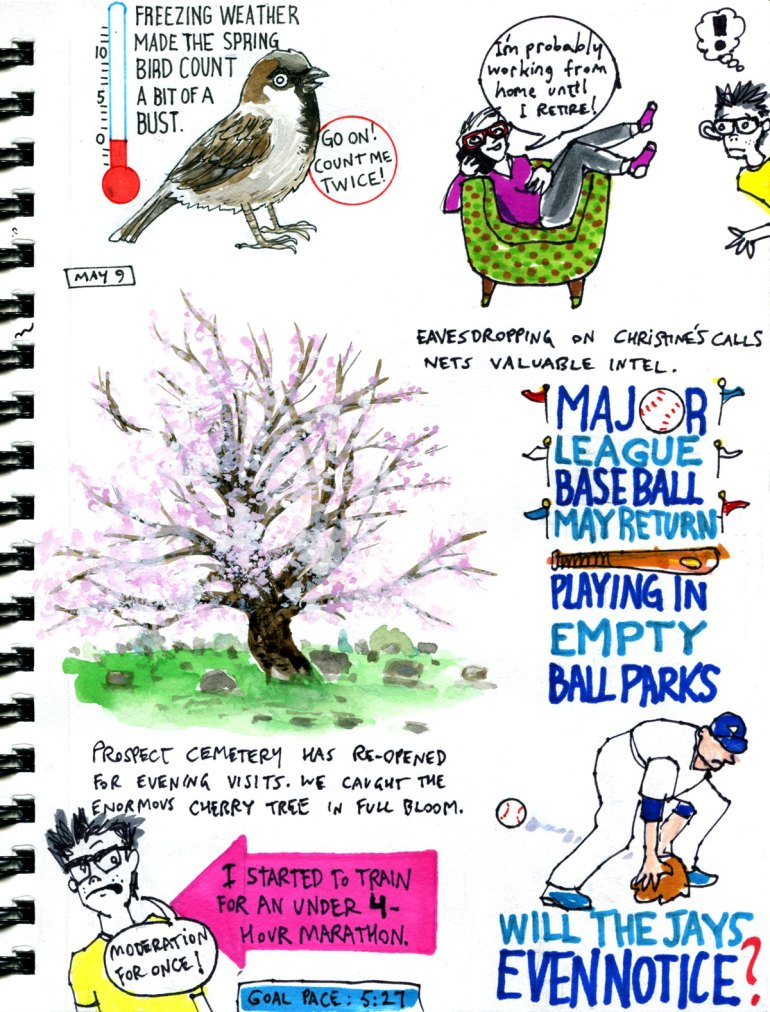 My Pandemic Diary Page 44 bird count, cherry tree, marathon, Blue Jays, MLB