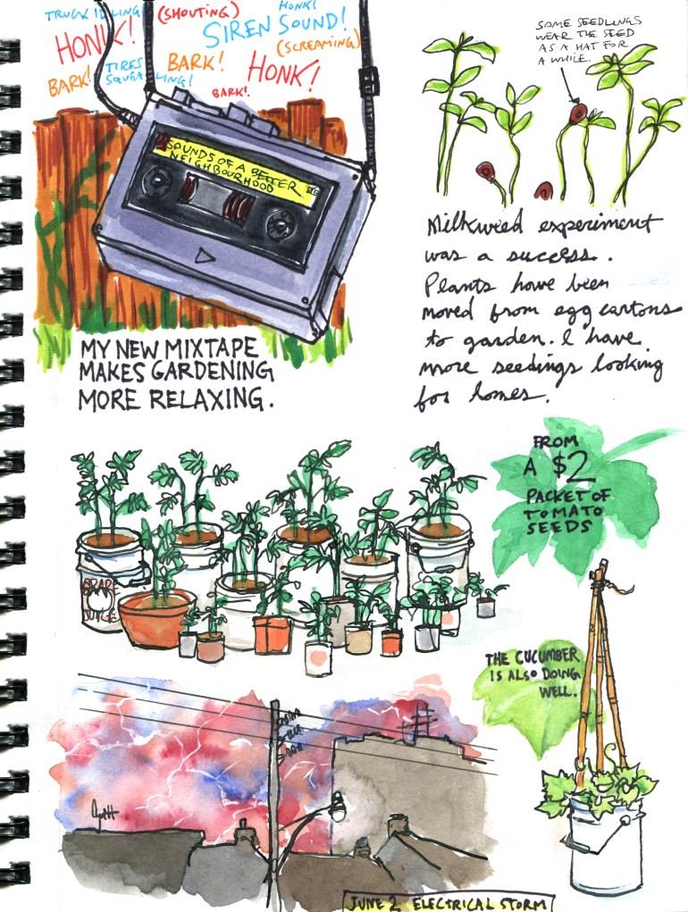 My Pandemic Diary page 52 gardening, tomoatoes, milkweed, cucumber, thunderstorm,mixtape
