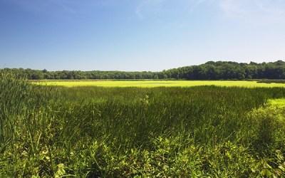 Sarett Nature Center permanently protects Brown Sanctuary in Benton Harbor
