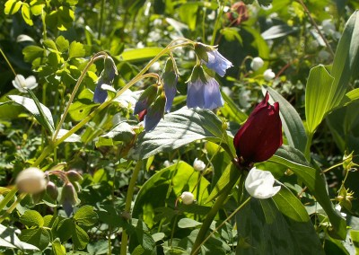 Kesling Nature Preserve