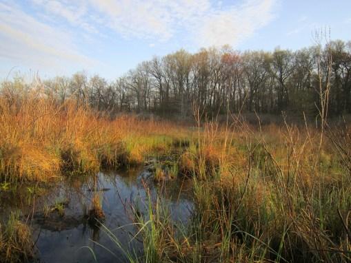 Corey Lake Preserve