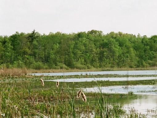Justin's Marsh