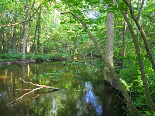 Paw Paw River Preserve
