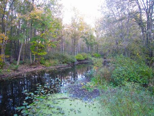 Swan Creek Preserve