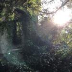 Baron Hill Ruins