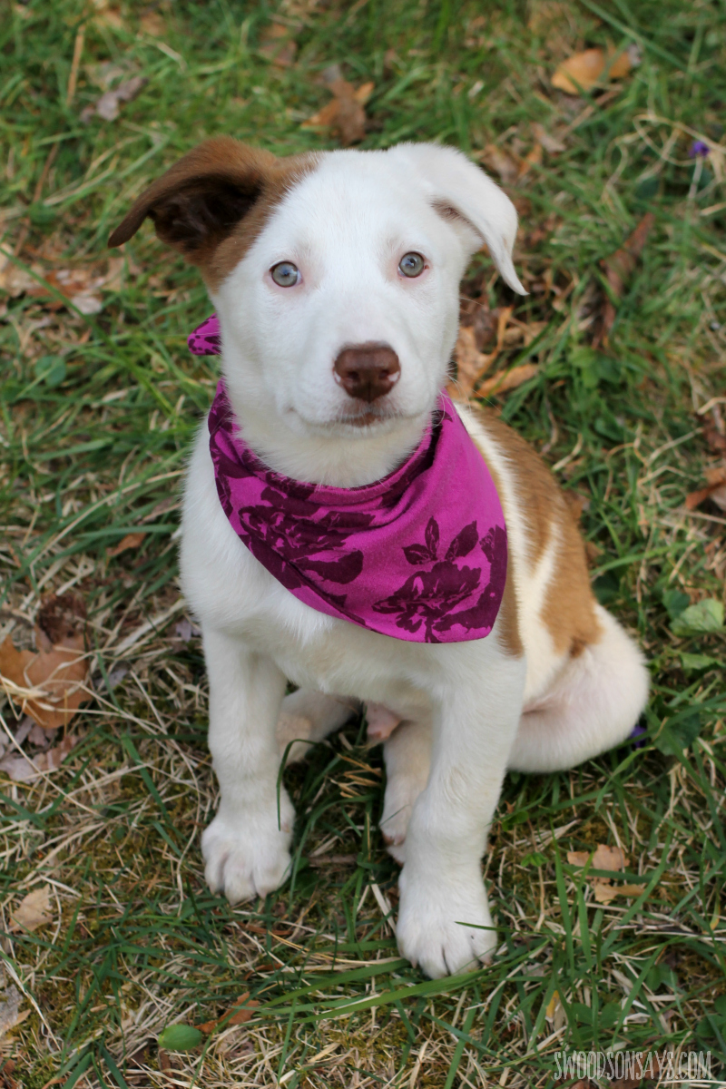 upcycled dog scarf diy