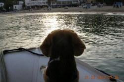 Zappi im Dinghi auf Ibiza