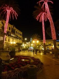Palmen mit Weihnachtsbeleuchtung