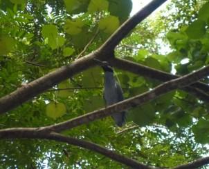 Gelbkopf-Irgendwas-Vogel