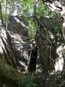 Verschlungene Gebäudereste