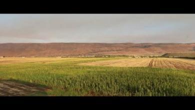 صورة زراعة الفستق تعود لأراضي سهل الغاب بعد انقطاع لعدة سنوات