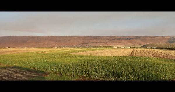 u rEyh6T60c - زراعة الفستق تعود لأراضي سهل الغاب بعد انقطاع لعدة سنوات
