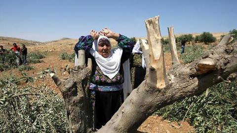 1606425286 9636675 852 480 5 2 - إسرائيل تتلف سنوياً الآلاف من أشجار الزيتون بالأراضي الفلسطينية