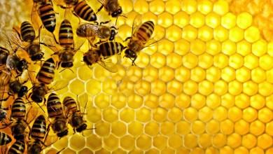 صورة هل سمعت عن العلاج بهواء النحل لأمراض الجهاز التنفسي؟ تعرف معنا عليه