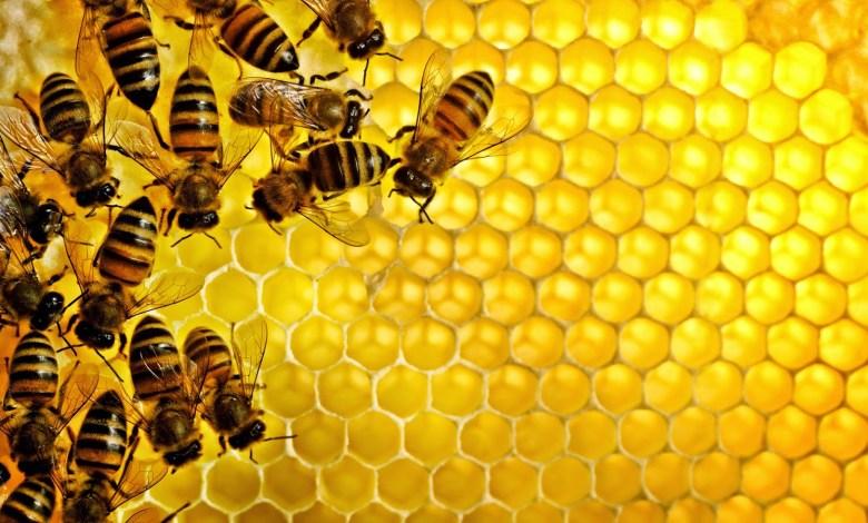 896717349e237a614ccfdbd8f60797c5 - هل سمعت عن العلاج بهواء النحل لأمراض الجهاز التنفسي؟ تعرف معنا عليه