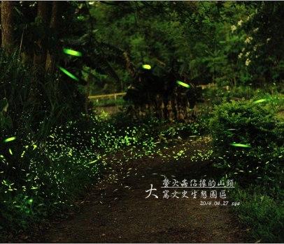 [苗栗 景點] 大窩文史生態區 | 螢火蟲的追逐(5)