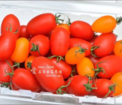愛美客番茄農場 | 薄膜農法讓番茄更甜、更營養