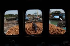 BATU PAHAT 24 JUNE 2016. Pekerja melakukan pemungahan kelapa dari kapal ke dalam lori sebaik tiba dari Indonesia untuk kegunaan seluruh negara sepanjang Ramadan di Pelabuhan Barter Trade , Batu Pahat. Lembaga Pemasaran Pertanian Persekutuan (FAMA) mengimport khas sebanyak 1.5 juta biji kelapa bagi menampung permintaan yang tinggi oleh pengguna sempena bulan ramadhan dan syawal di negara ini. Foto Syarafiq Abd Samad