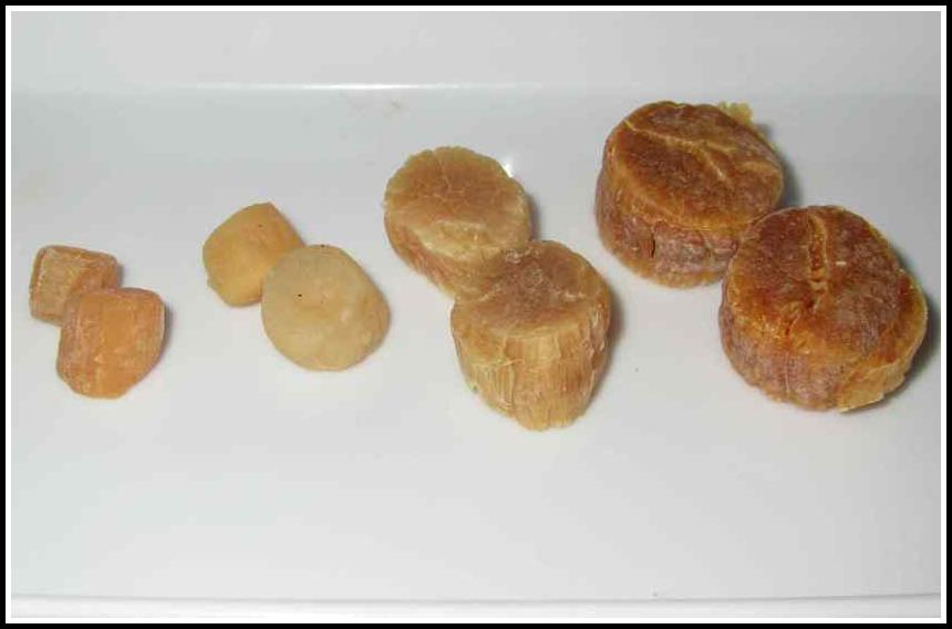 A close up of a variety of Dried Scallops