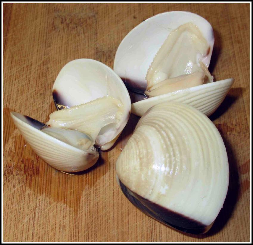 Small Hard-shell Clams