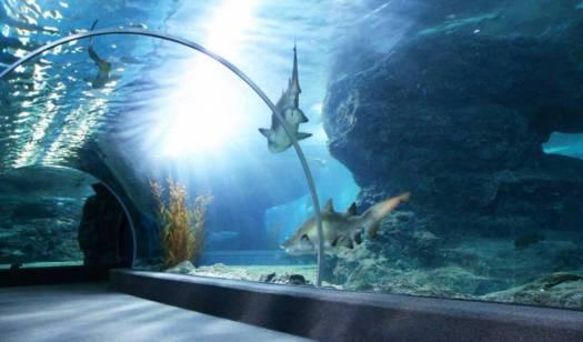 Aquarium Mexico