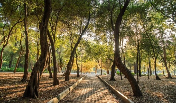 Chapultepec Forest at Mexico City