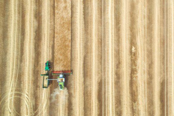 Combiner in wheat harvest