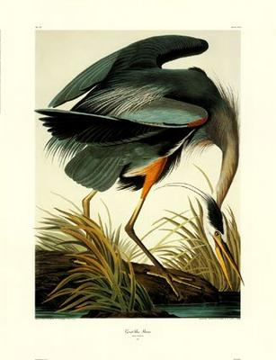 Audubon Limited Edition Prints