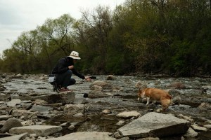 Etobicoke Valley Dog Park - Maria and Limone playing in the shallow creek access with a rock beach