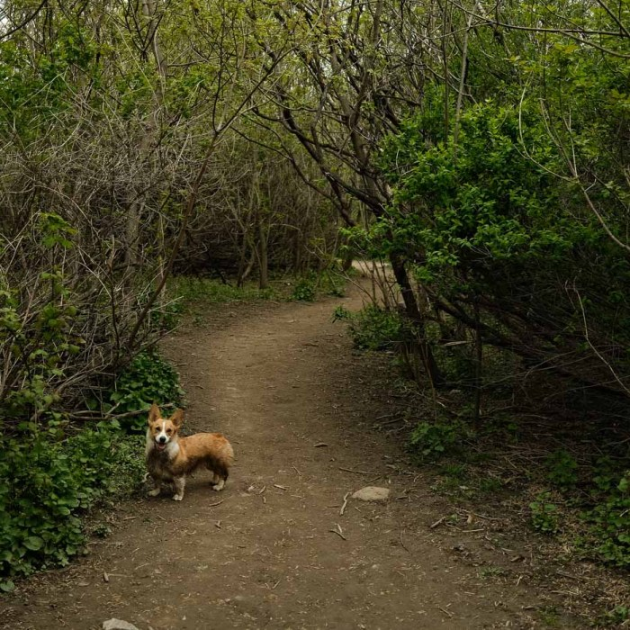 Etobicoke Valley Dog Park Review – An Off Leash Trail Oasis