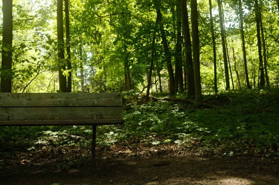 Shaded bench area located in the Trillium Trail at Bronte Creek Provincial Park