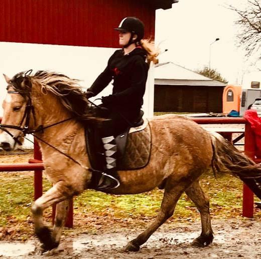hest8