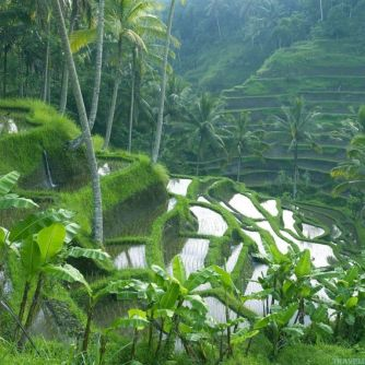 rice-terrace-bali-wallpapers-1024x768